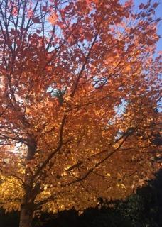 Whistler fall